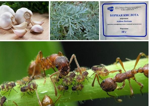 Растения в борьбе с насекомыми